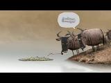 короткометражный мультфильм про двух антилоп